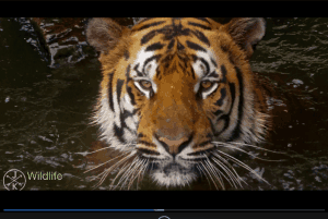 DVDFab Free Media Player